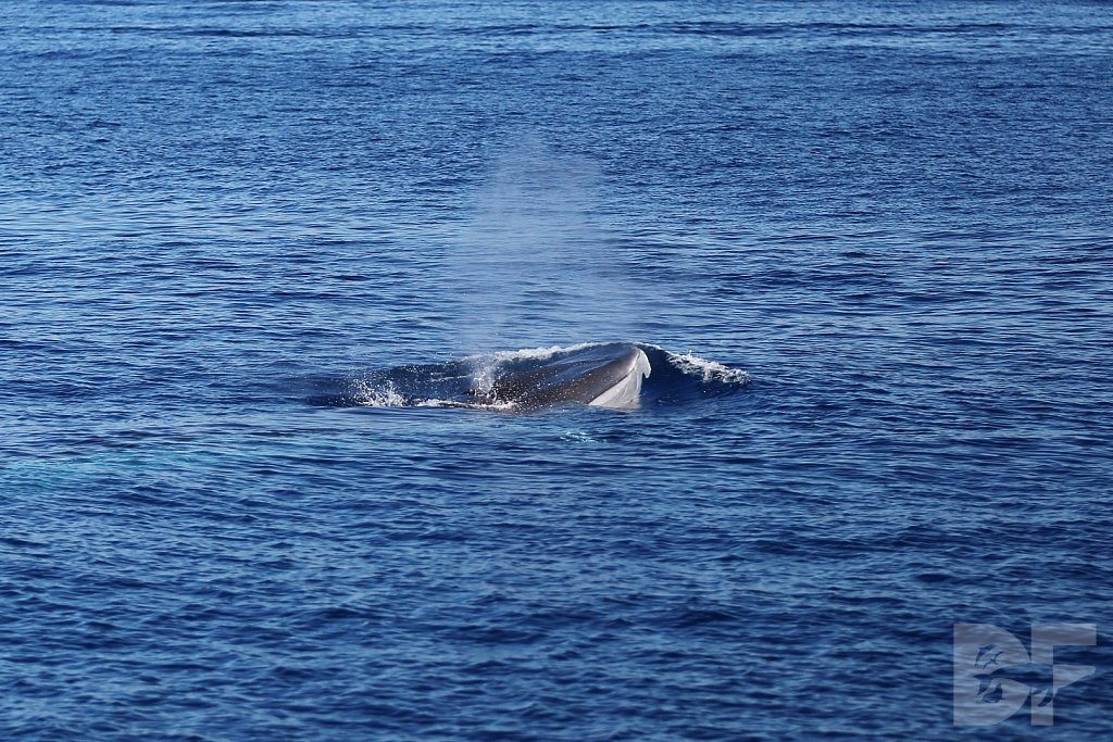 Something Fin Whale This Way Comes