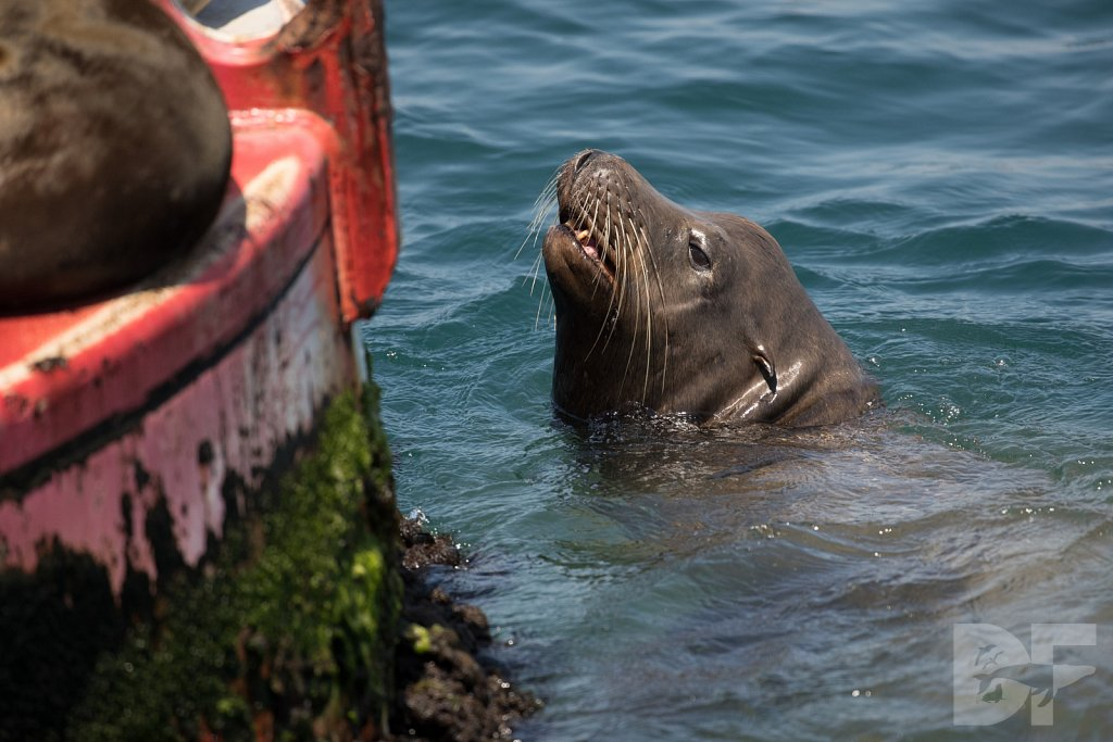 Pinniped Problems II