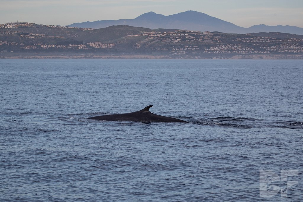 Enter the Fin Whale II