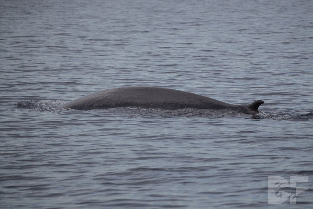 Enter the Fin Whale III