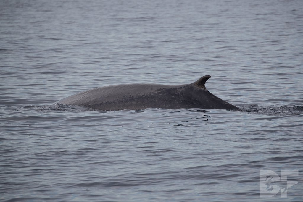 Enter the Fin Whale IV