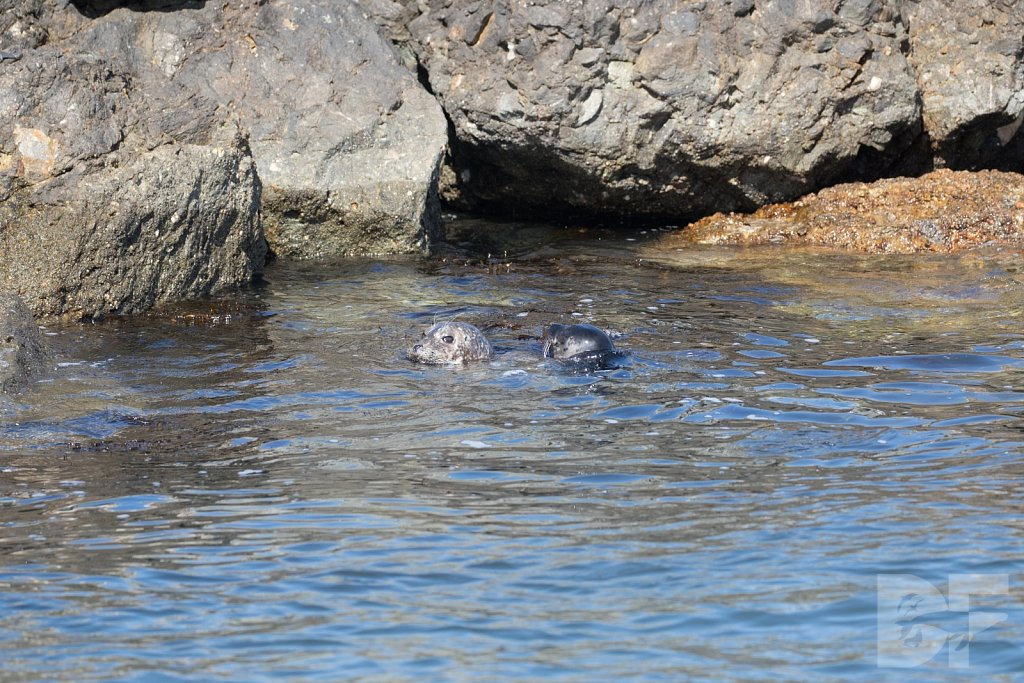 Harbor Seal Haven XIII