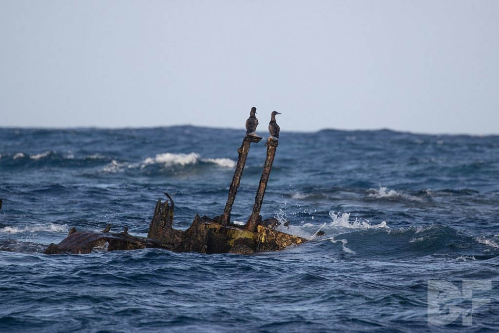 Shipwrecked Seabirds