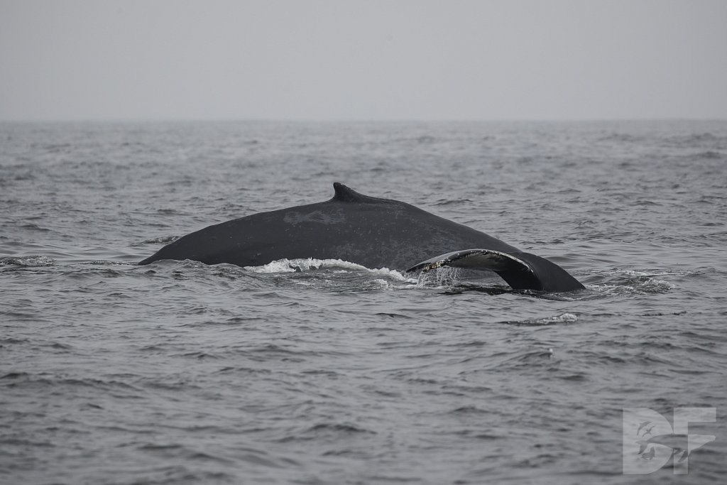 Monterey Day Trip: Humpbacks X