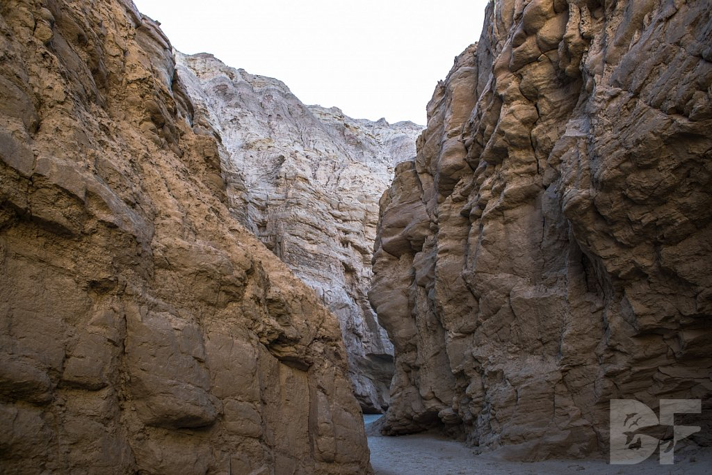 A Day in Anza Borrego IX
