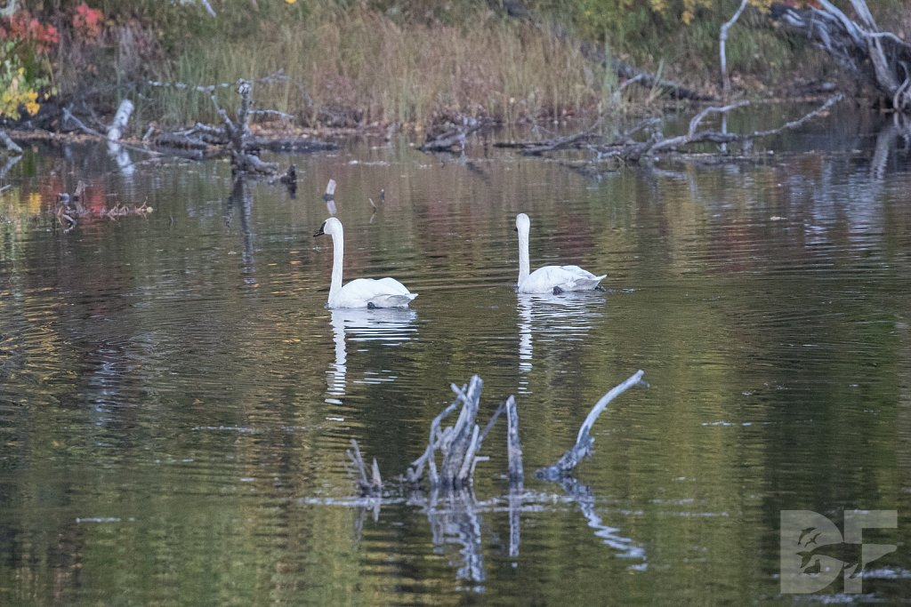 Two Trumpeters I