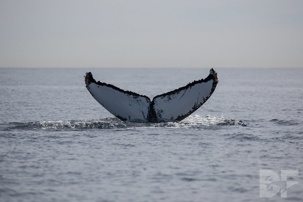 2nd Annual Birthday Humpback Trip III