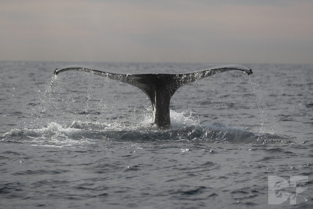 2nd Annual Birthday Humpback Trip XX