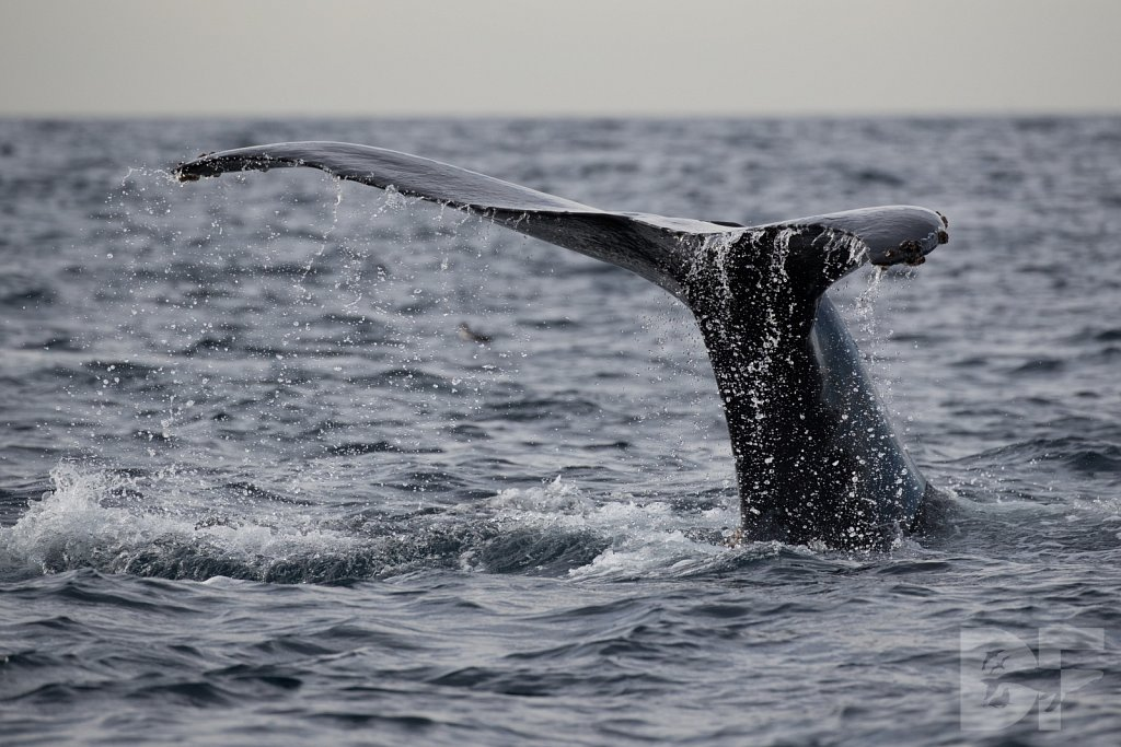 2nd Annual Birthday Humpback Trip XXIX