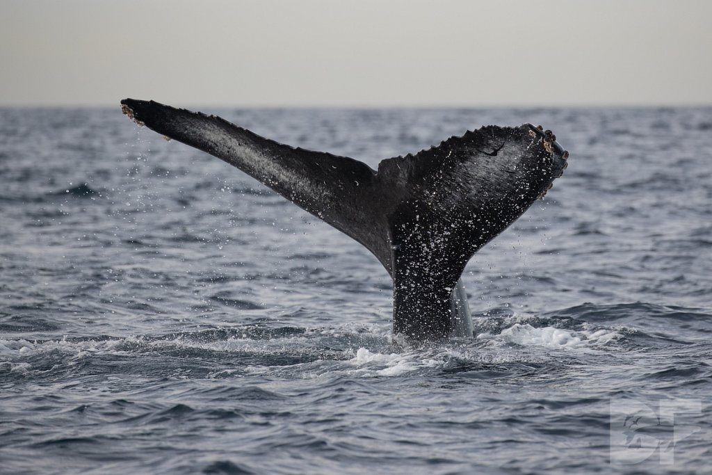 2nd Annual Birthday Humpback Trip XXX