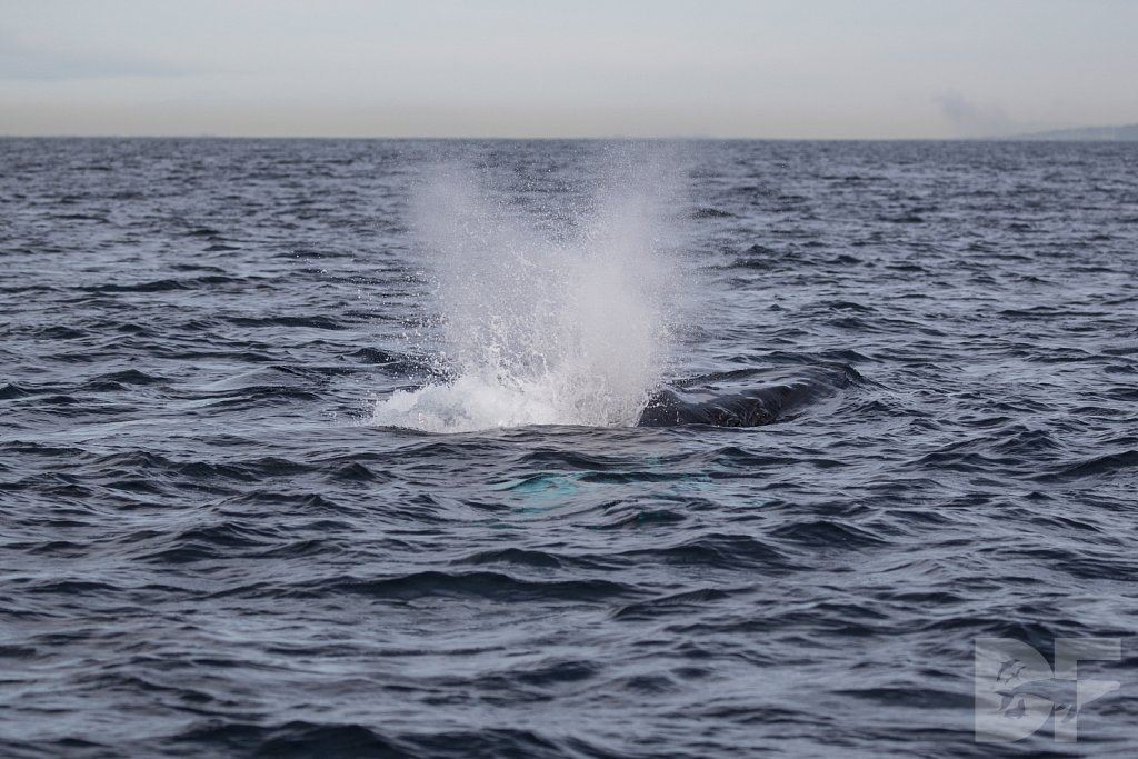 2nd Annual Birthday Humpback Trip XXXVII