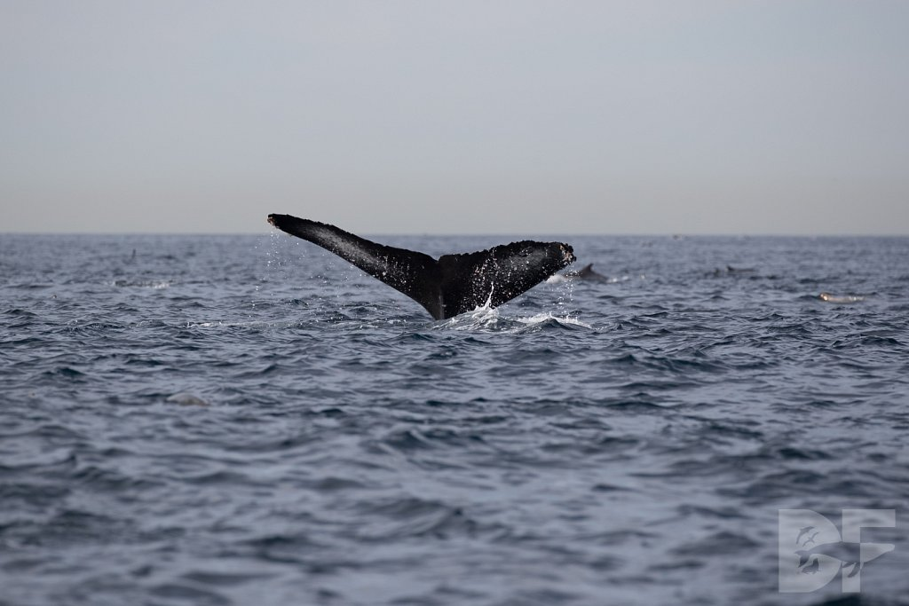 2nd Annual Birthday Humpback Trip XLVIII