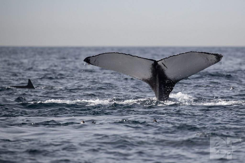2nd Annual Birthday Humpback Trip XLIX