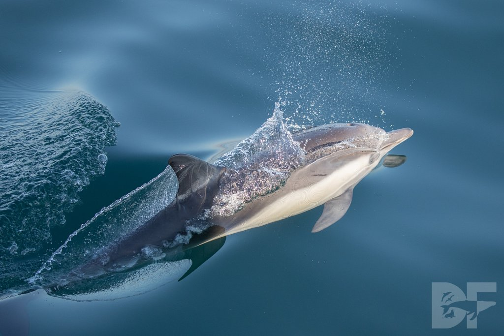Dolphins Are Forever XXX
