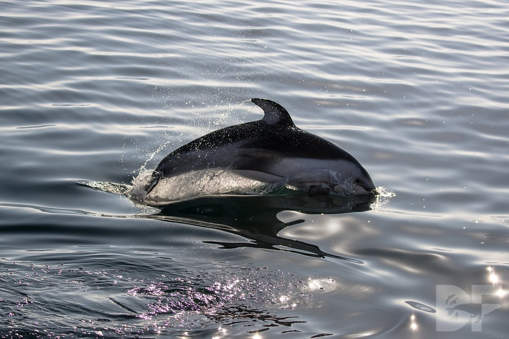 Dolphins Are Forever VII
