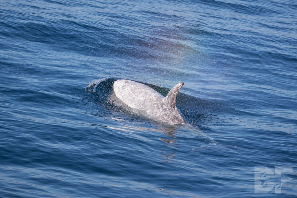 Dolphins Are Forever XIX