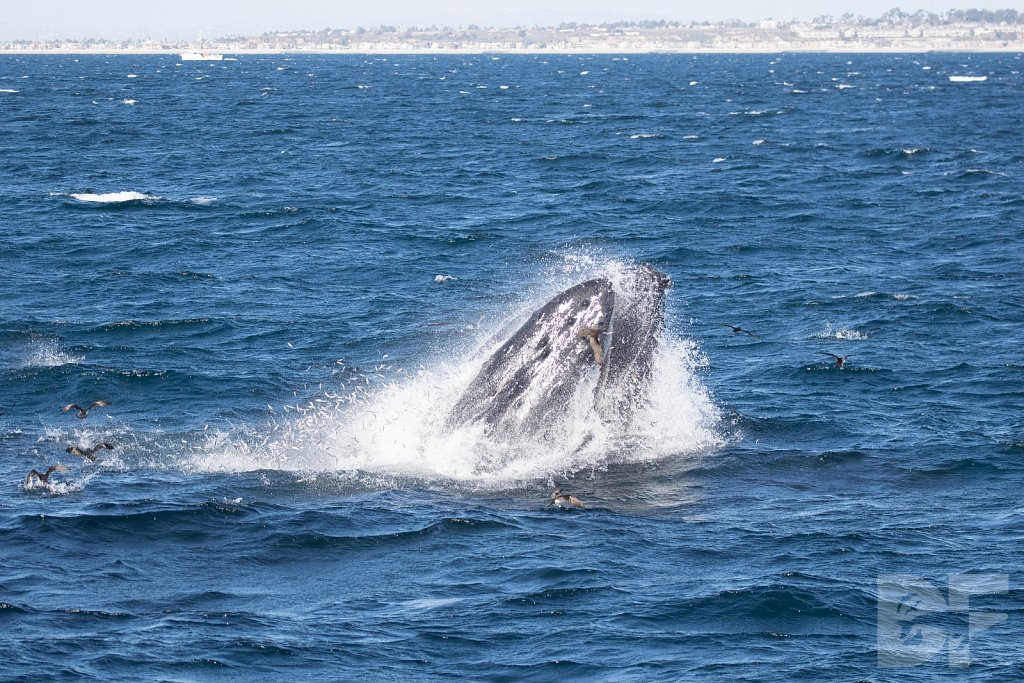 The Holiday Humpbacks LVII