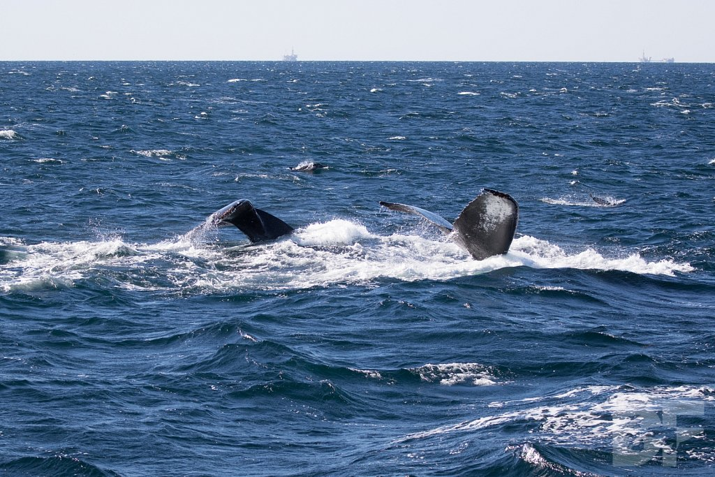 The Holiday Humpbacks LXI