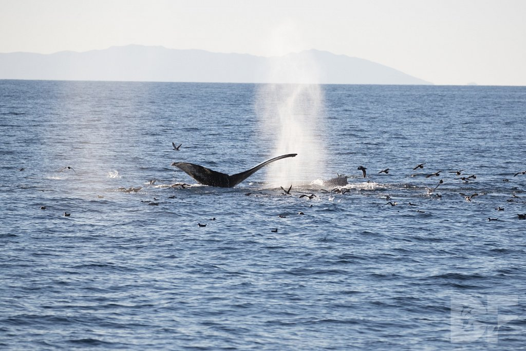 The Holiday Humpbacks LXXIII