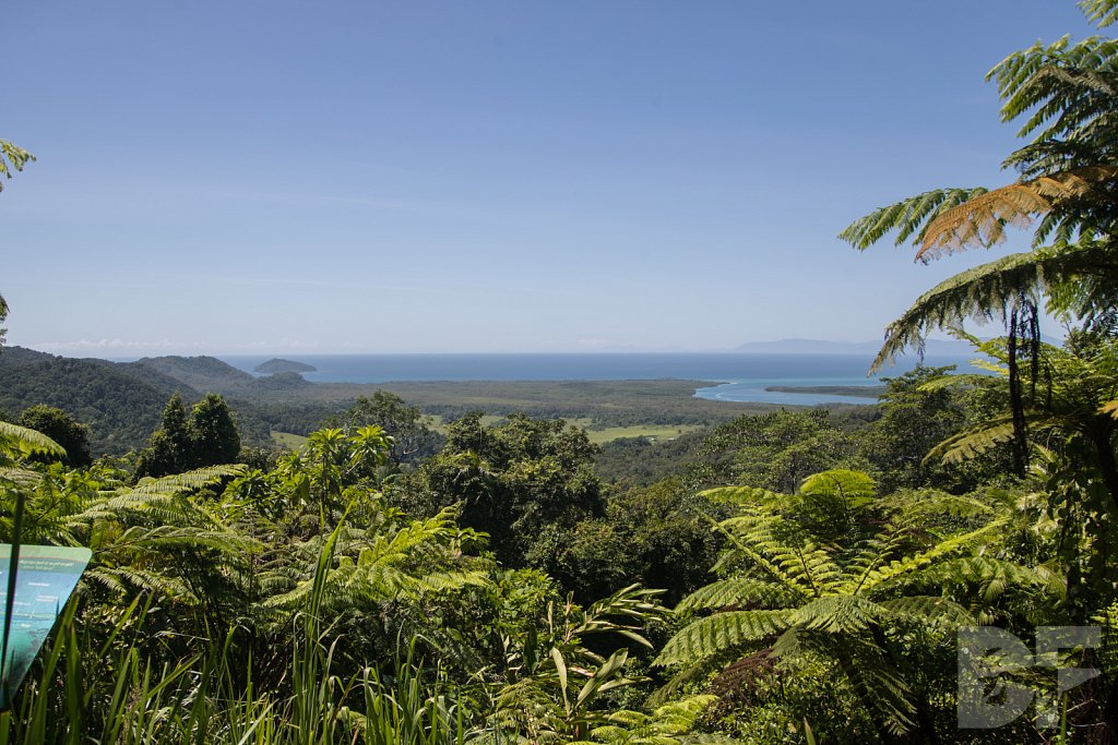 The Daintree Rainforest I