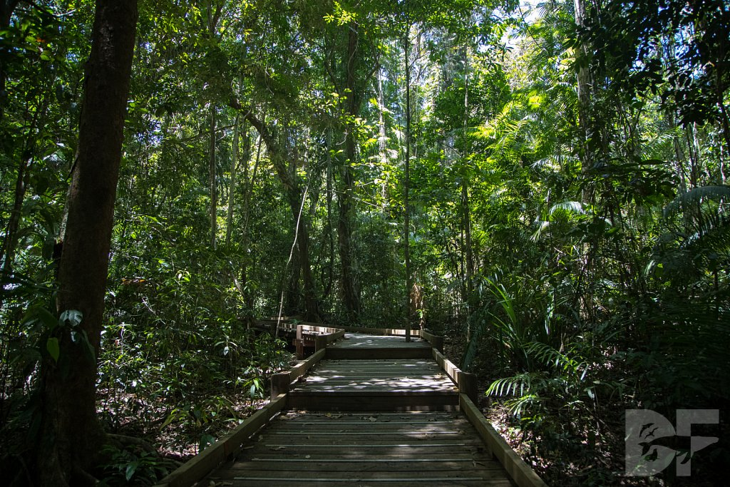 The Daintree Rainforest II