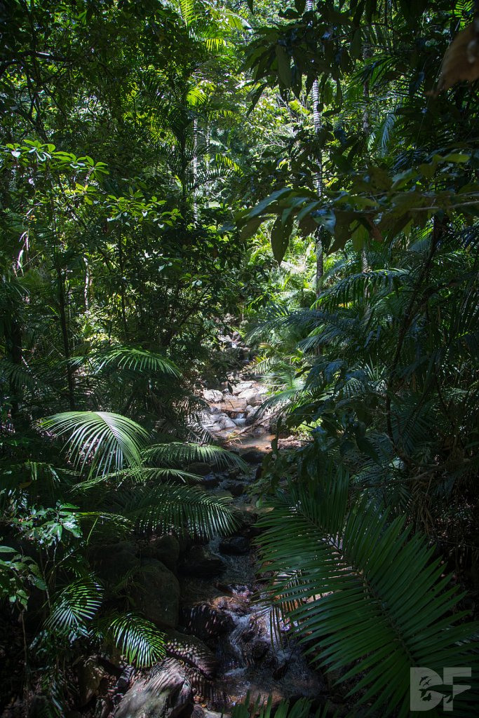 The Daintree Rainforest IV