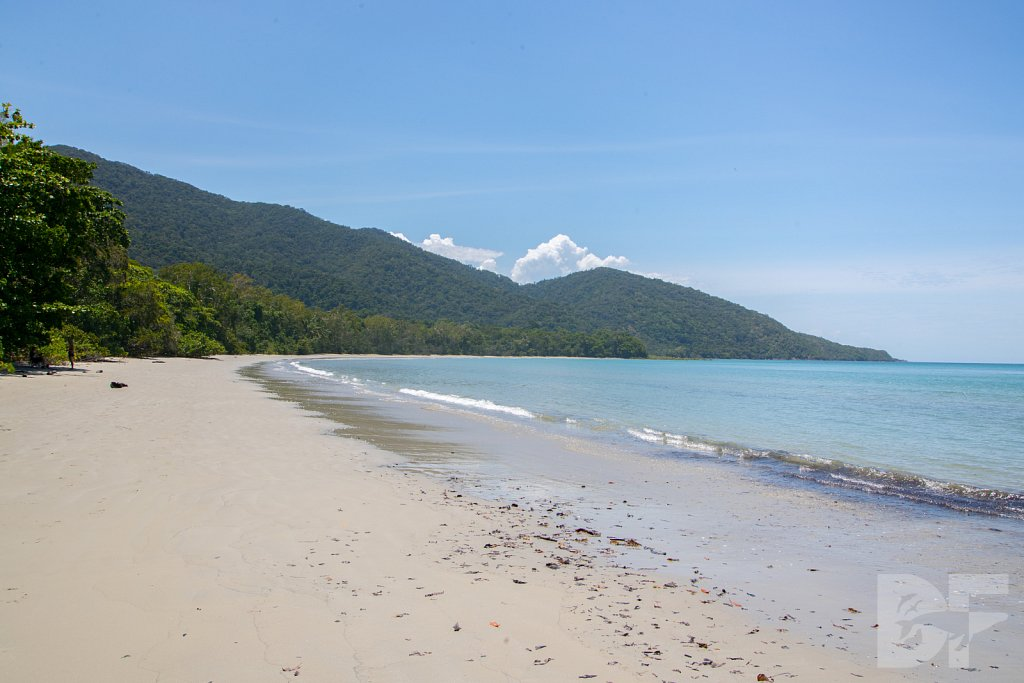 The Daintree Rainforest XIII