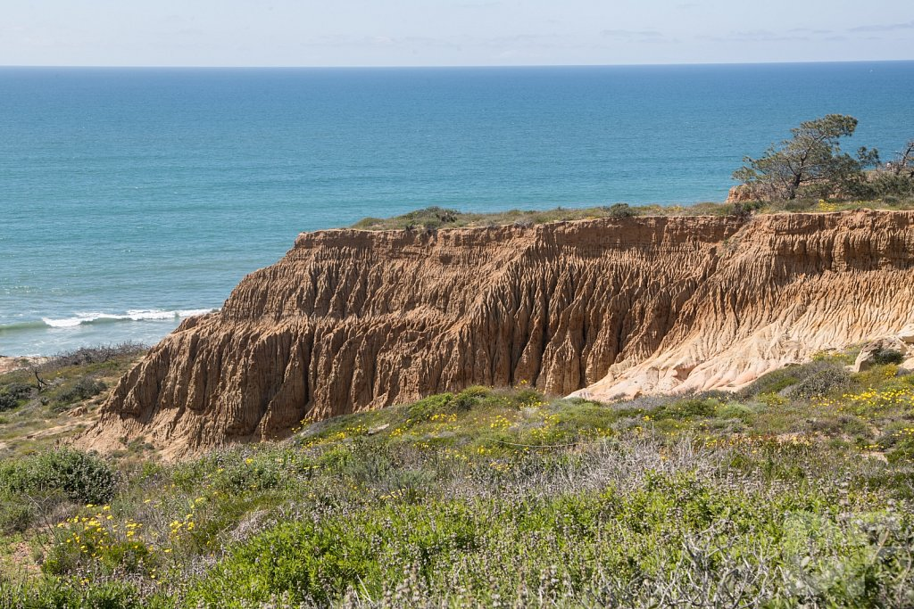 Treasures of Torrey Pines XVII