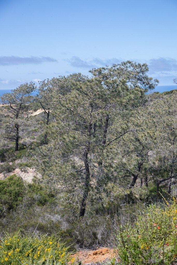 Treasures of Torrey Pines I