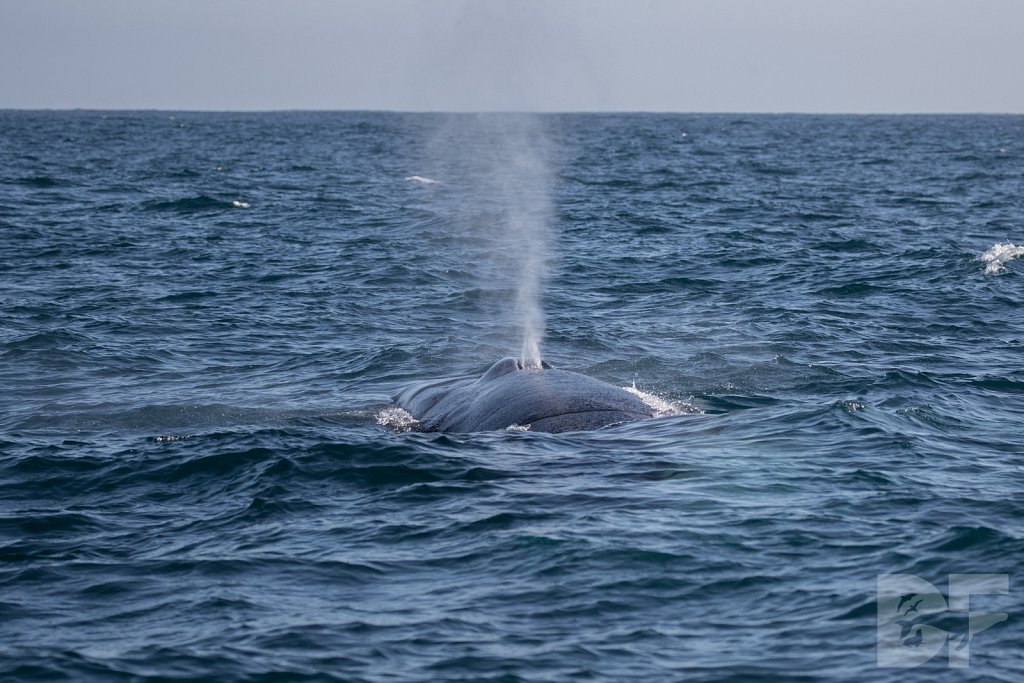 Enter the Fin Whales I
