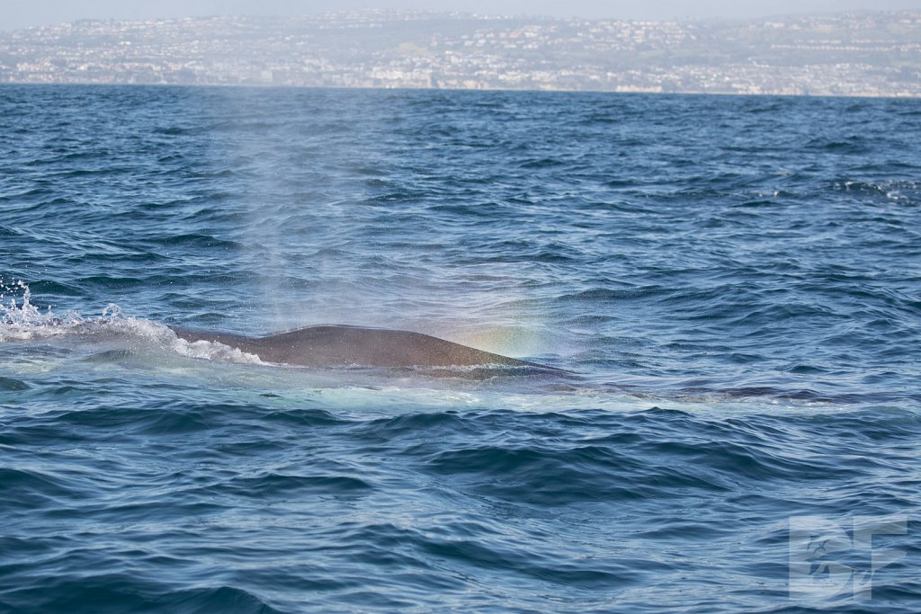 Enter the Fin Whales III