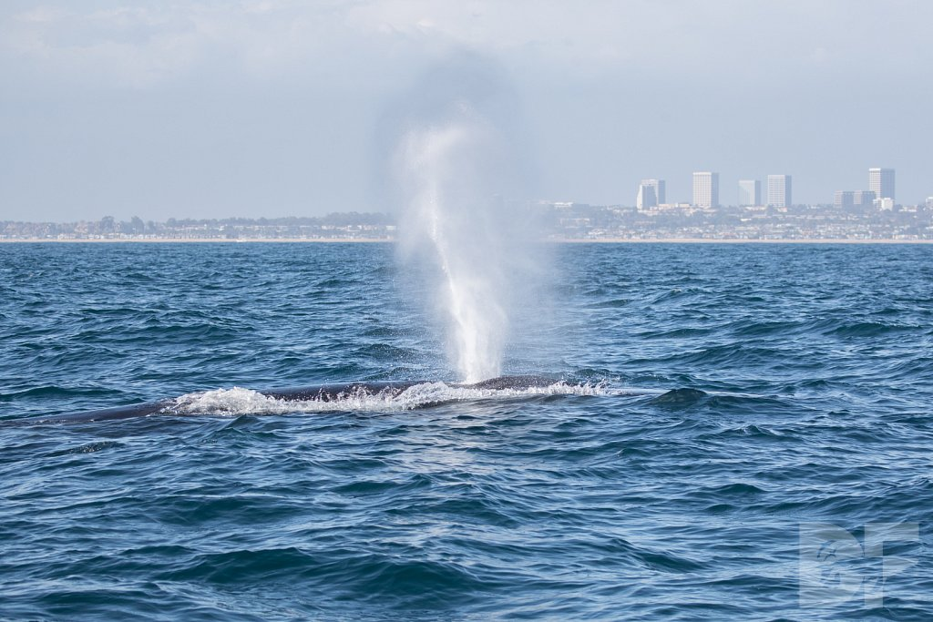 Enter the Fin Whales IV