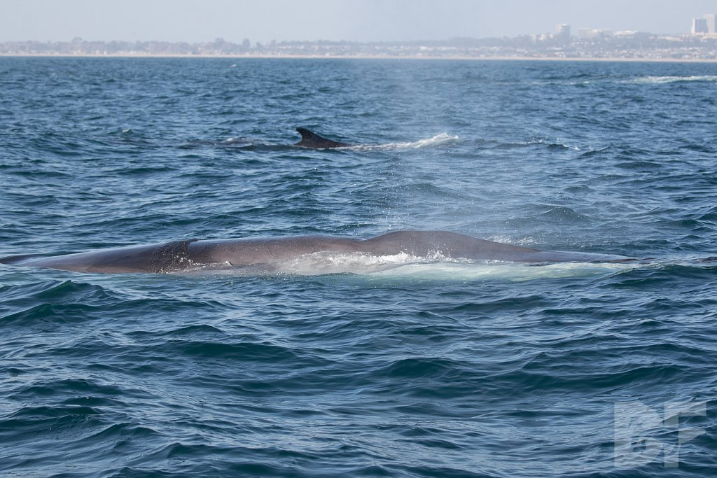 Enter the Fin Whales VIII