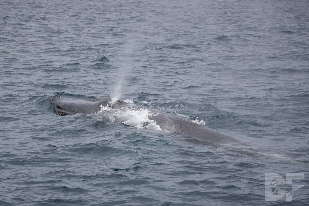 Enter the Fin Whales XII