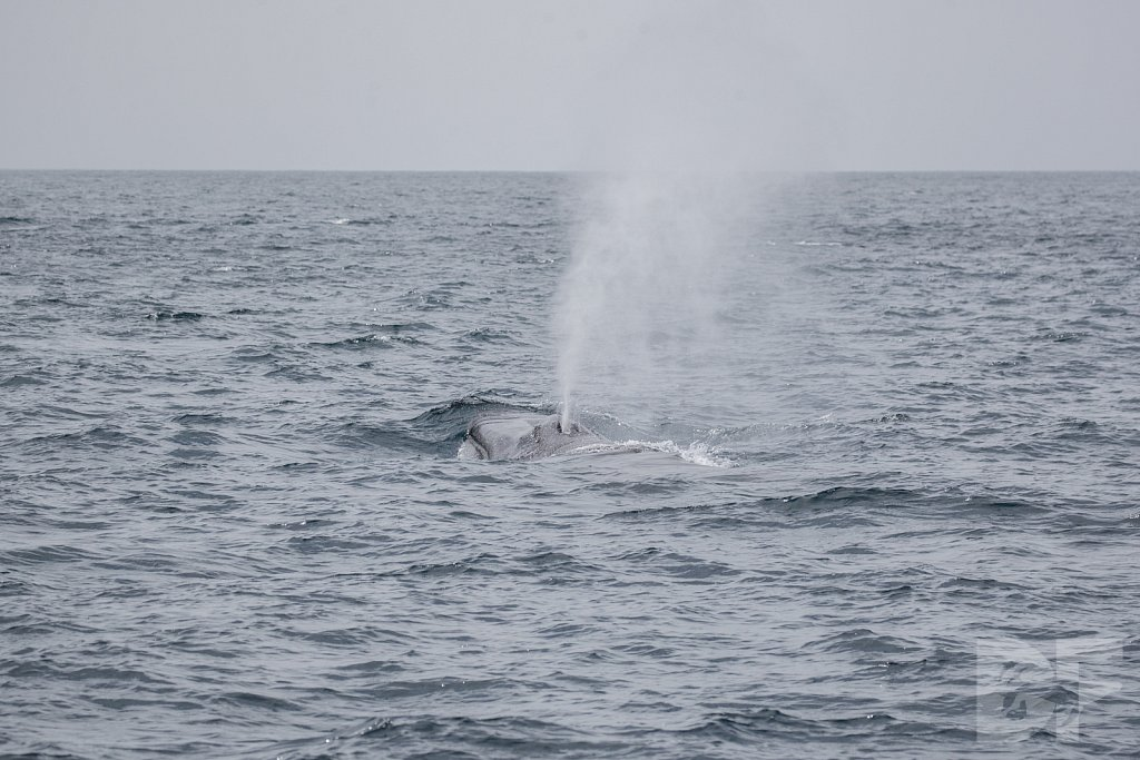 Enter the Fin Whales XIII
