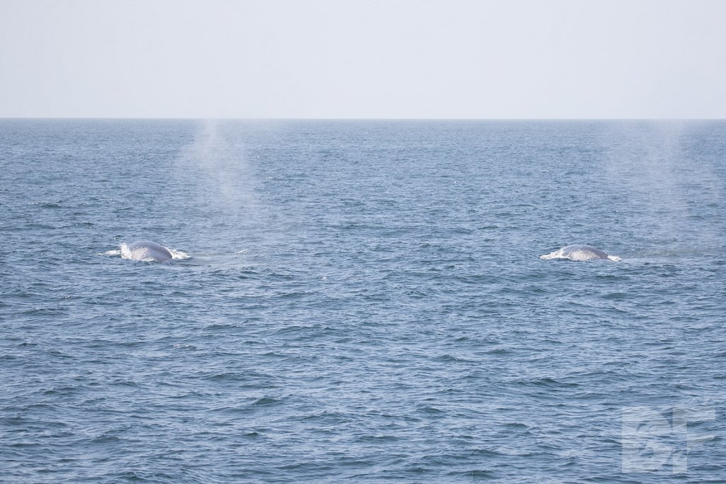 Enter the Fin Whales XV
