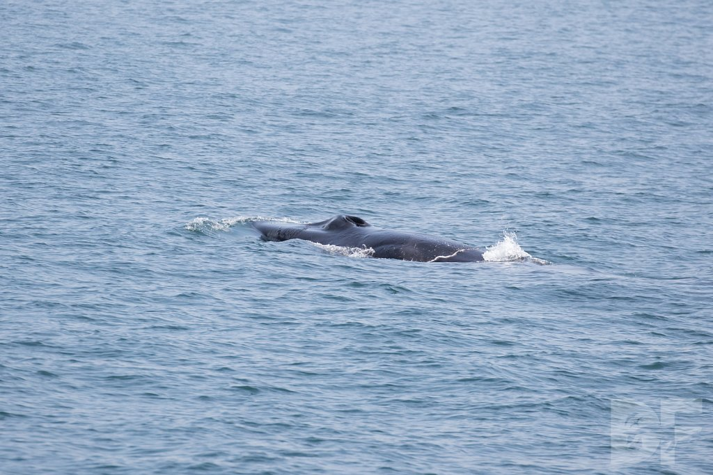 Enter the Fin Whales XX