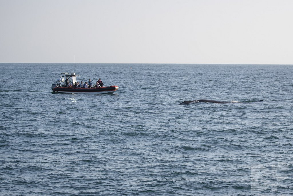 Enter the Fin Whales XXII