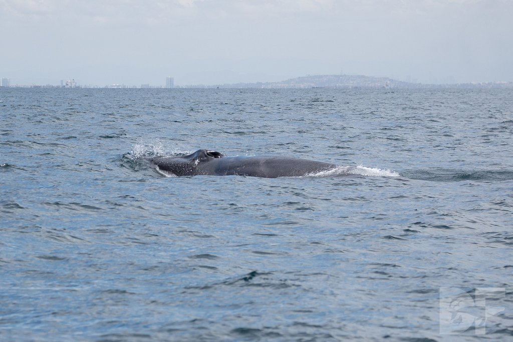Enter the Fin Whales XXVIII