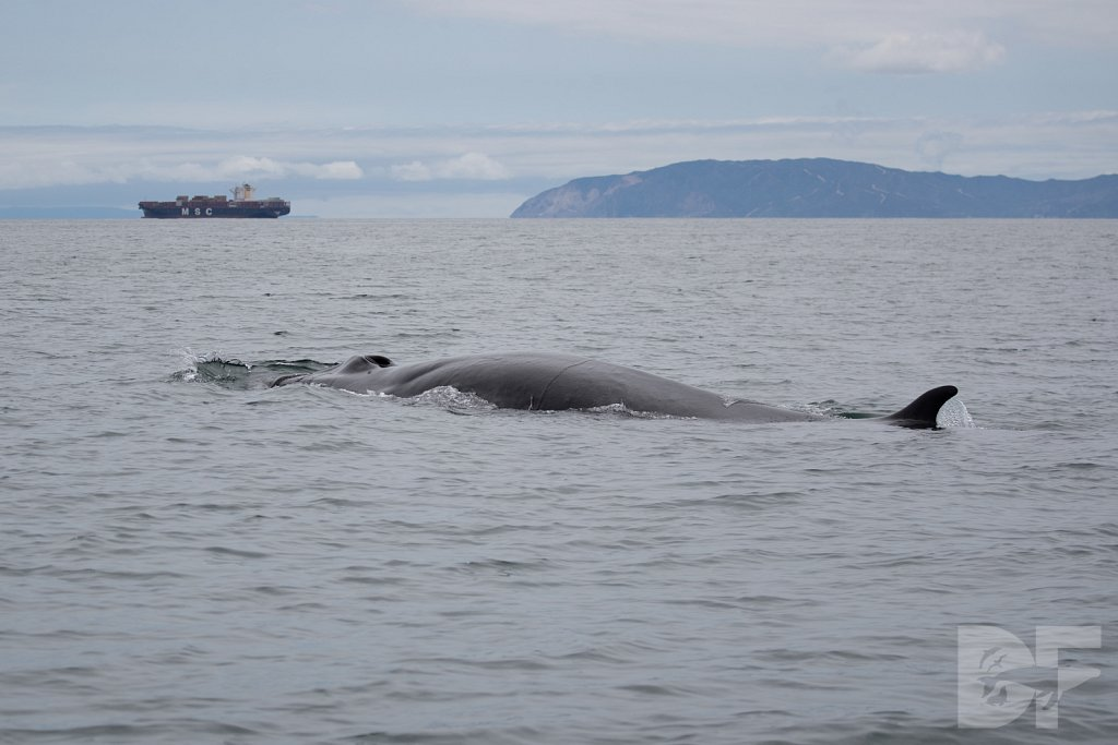Enter the Fin Whales XXXII