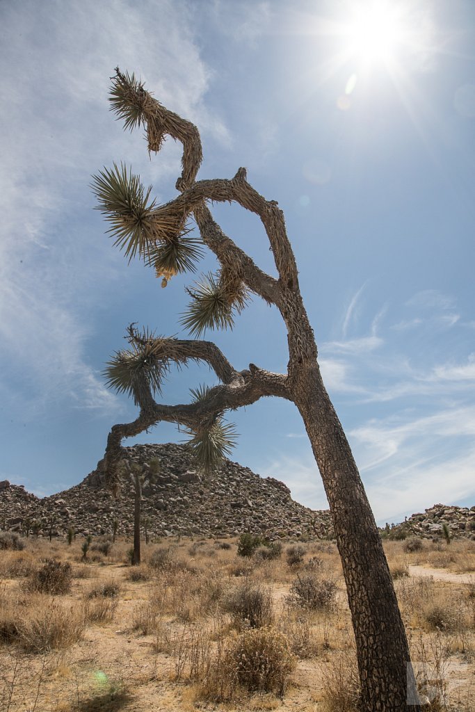 My Day in Joshua Tree IV