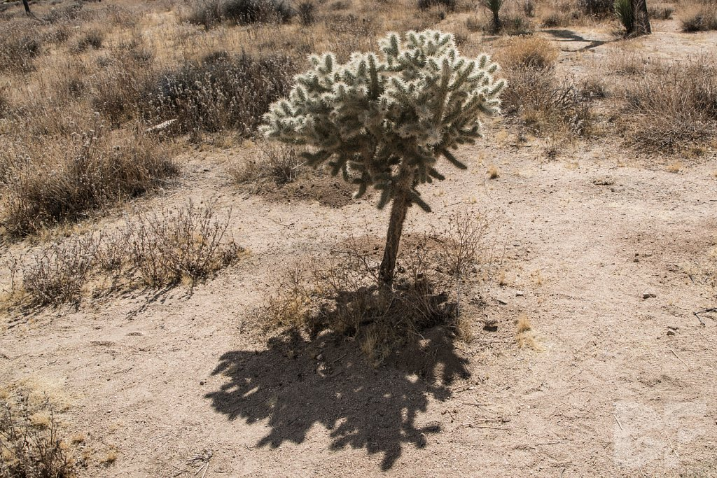 My Day in Joshua Tree VI
