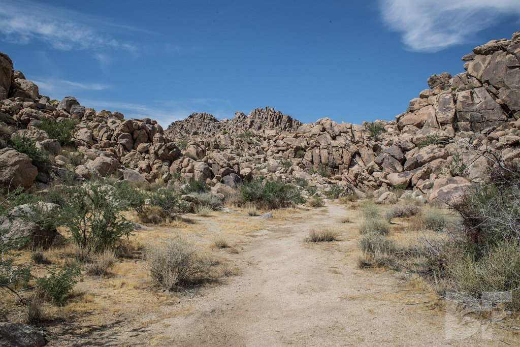 A Day in Joshua Tree IX