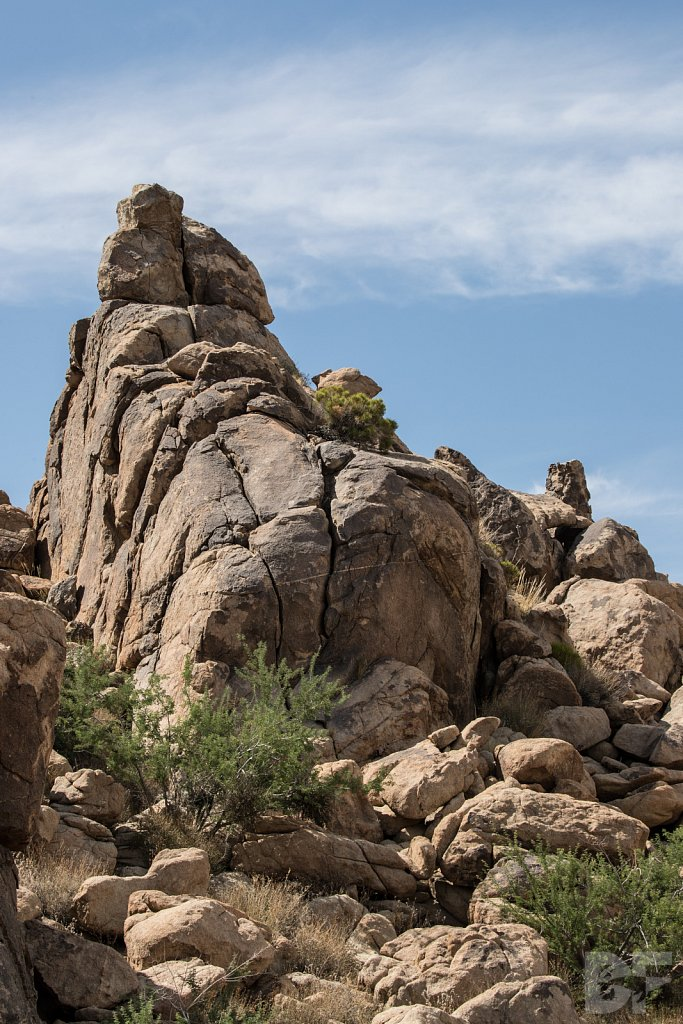 A Day in Joshua Tree X