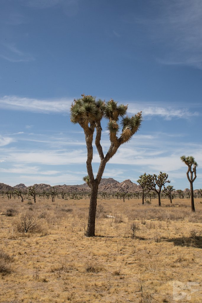 A Day in Joshua Tree XII