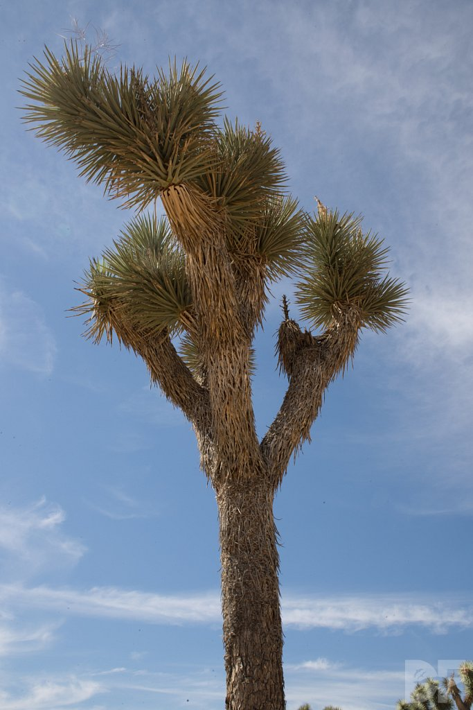 A Day in Joshua Tree XIII