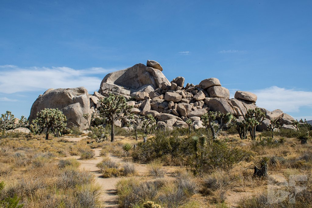 A Day in Joshua Tree XVI