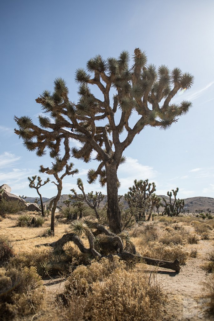 My Day in Joshua Tree XXI