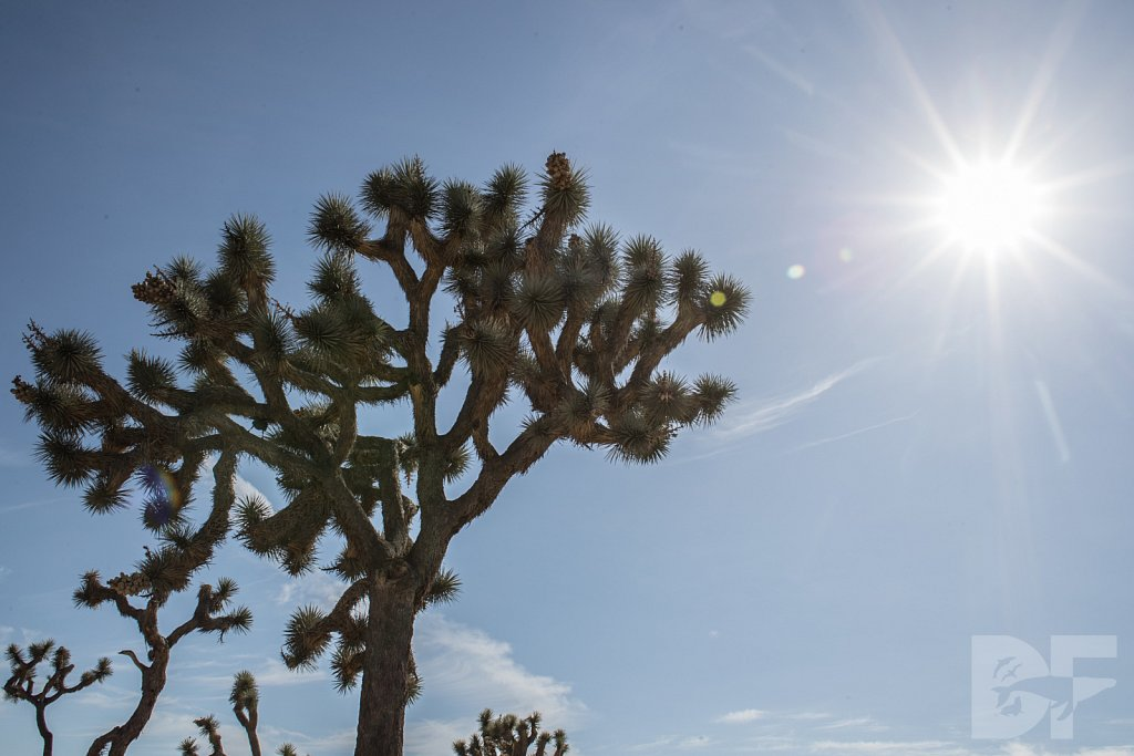 My Day in Joshua Tree XXII