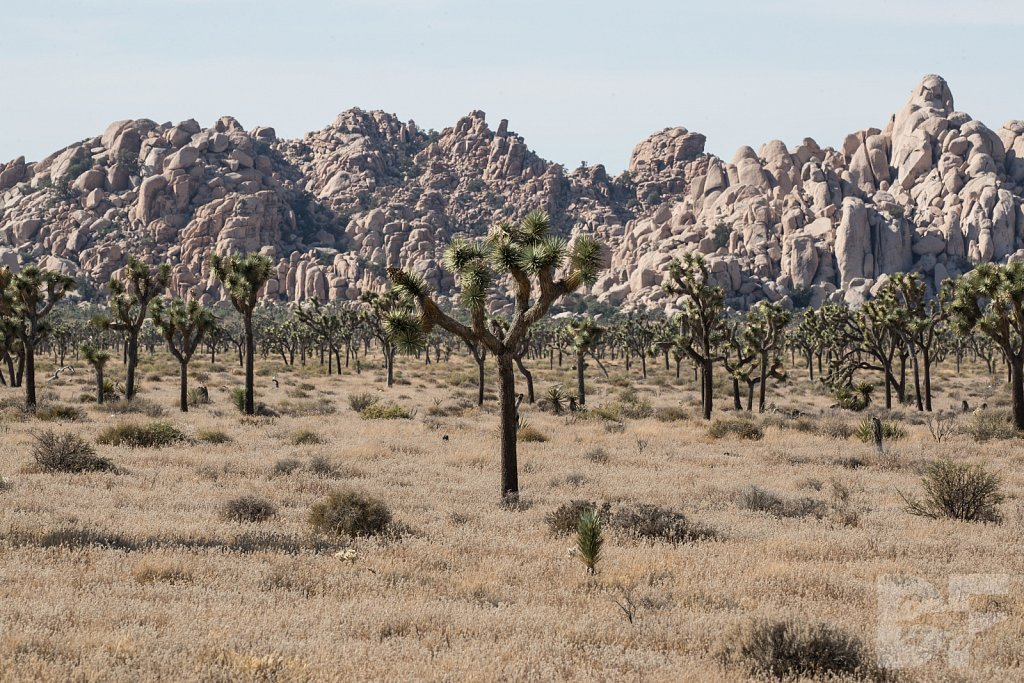 My Day in Joshua Tree XXIII